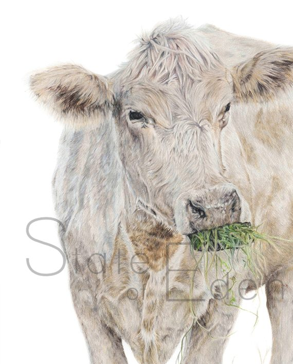 Cow print artwork, cow pencil drawing,