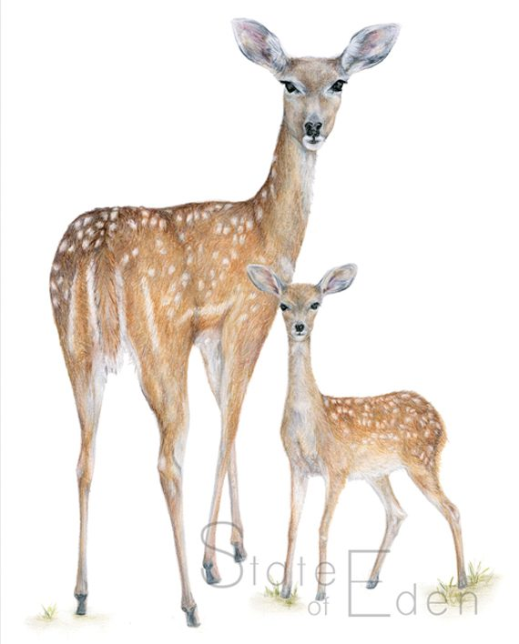 Deer and fawn wall print artwork, Nursery wall art, Children's bedroom wall art, SoE