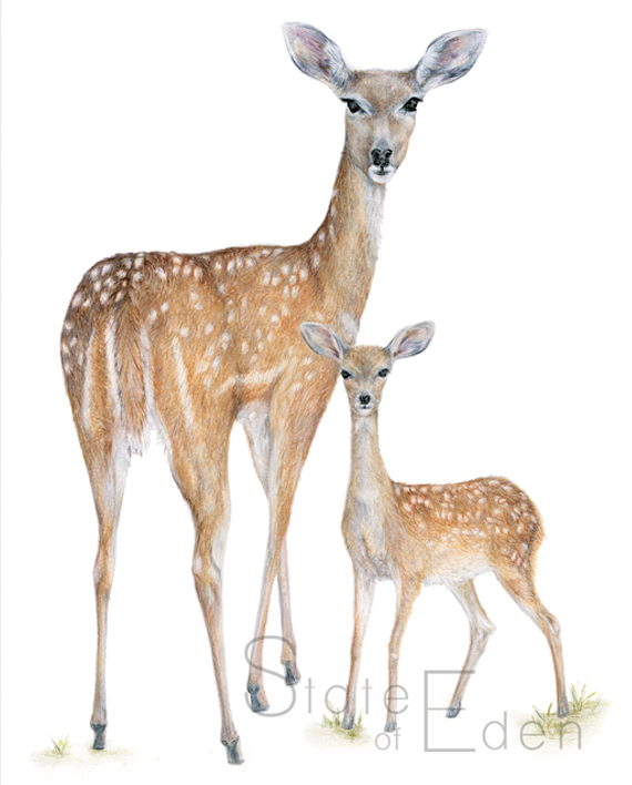 Deer and Fawn Wall Print Watermarked – State of Eden
