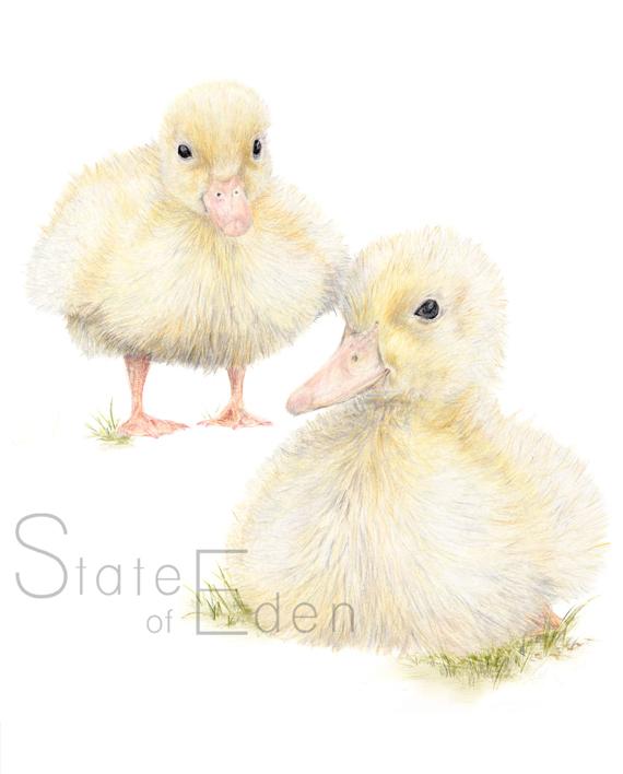 Duckling nursery childrens bedroom wall print watermarked