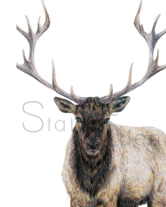 Elk Mini Print artwork watermarked