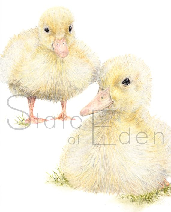 Nursery duckling mini print, children's bedroom print, chickens, chicks, duck