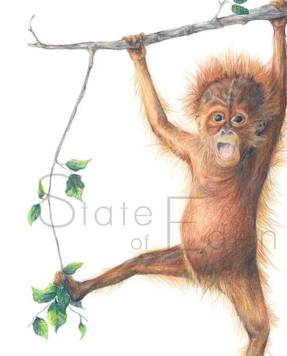 Orangutan mini print watermarked