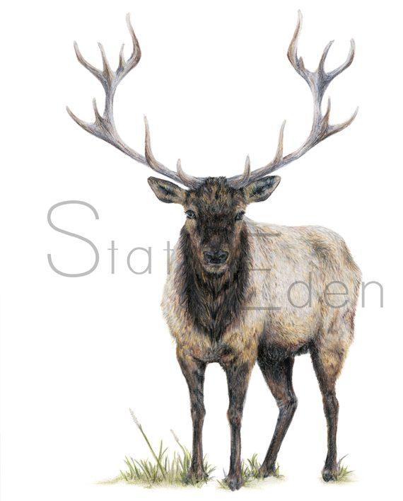 Elk Print artwork State of Eden