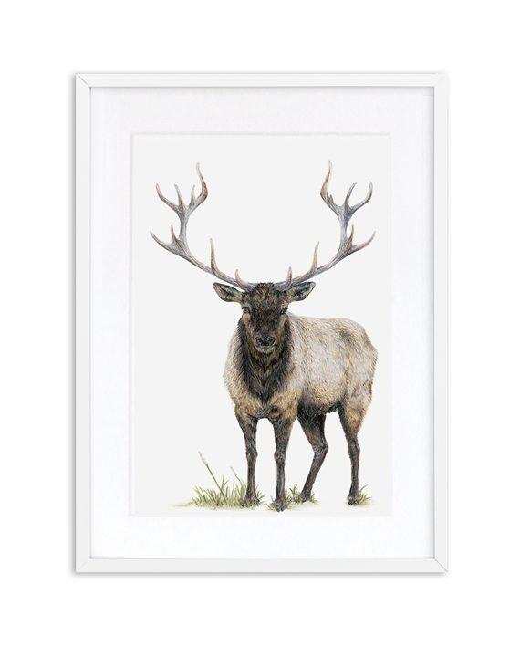 Elk Print White Frame