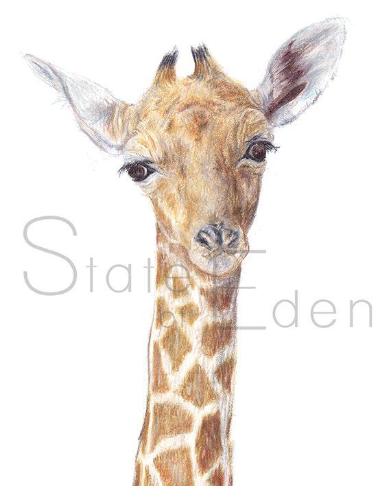 Giraffe mini print artwork, giraffe pencil drawing, State of Eden