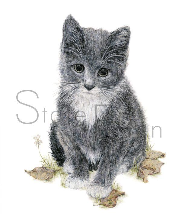 kitten print artwork, pencil drawing, cat print