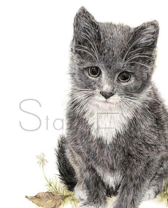 Kitten mini print artwork, kitten pencil drawing