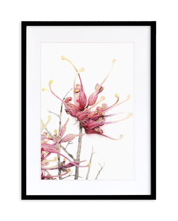 Grevillea Print State of Eden Australian Native Flower