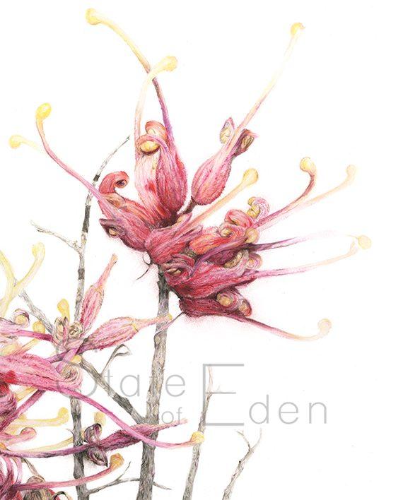 Grevillea print artwork, home State of Eden