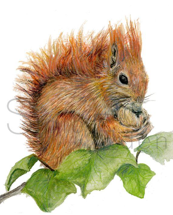 Squirrel Mini Print Squirrel Print artwork