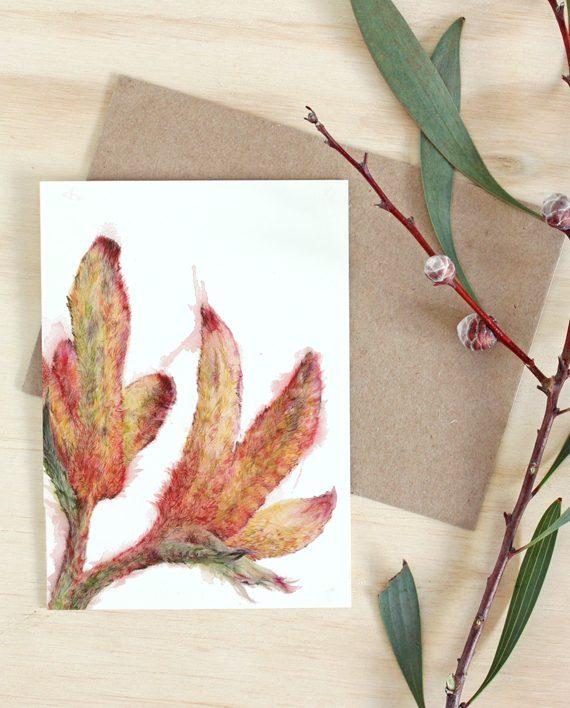 Kangaroo Paw card, Australian native flower card