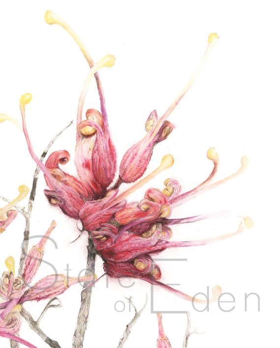 Grevillea Mini Print artwork State of Eden