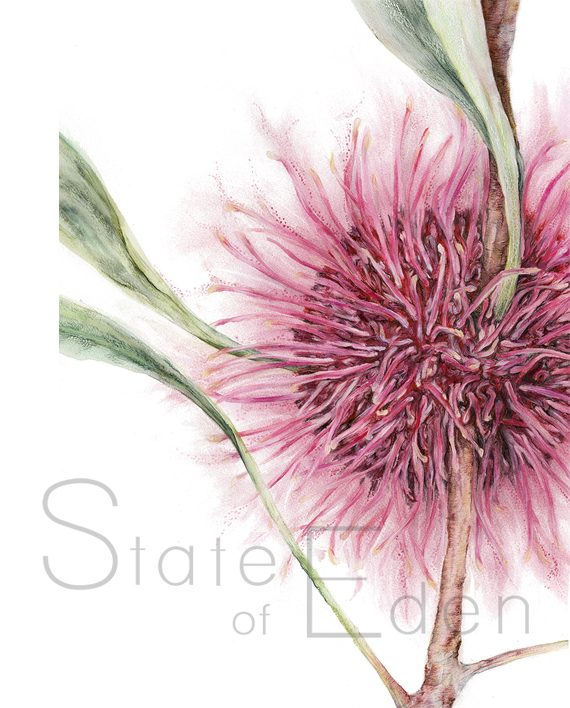 Hakea Mini Print artwork State of Eden