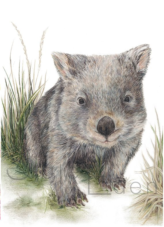 Wombat Print artwork State of Eden