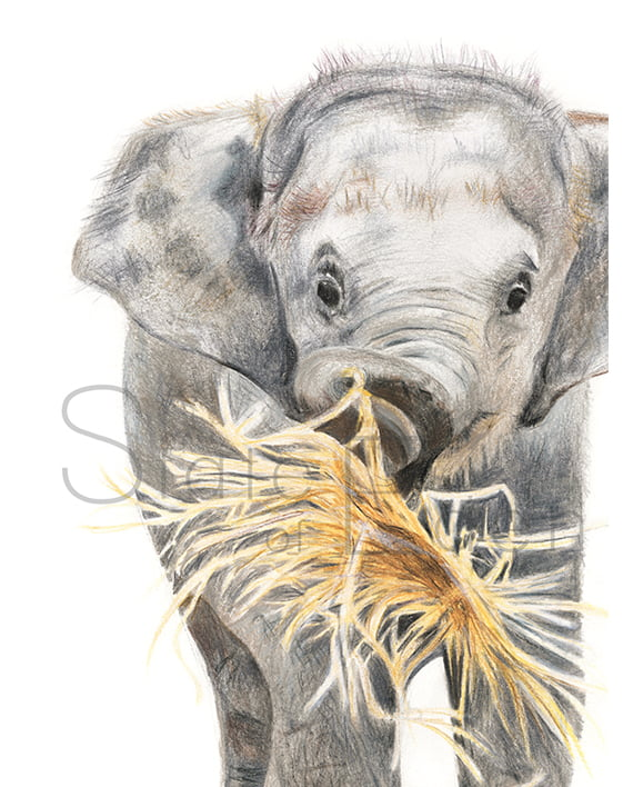 Elephant Mini Print artwork watermarked State of Eden