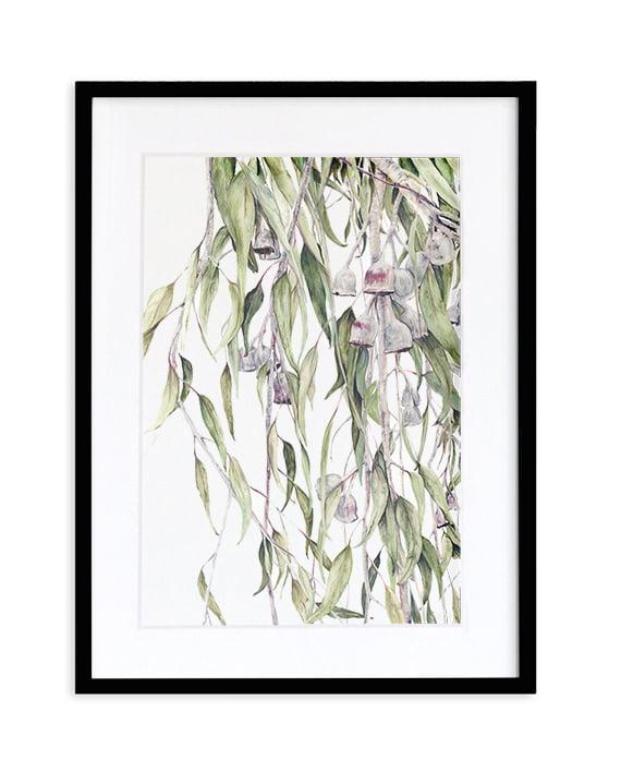 Silver Princess Eucalyptus Caesia print artwork framed Black