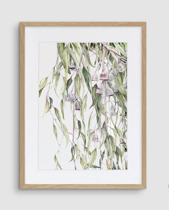 Silver Princess Eucalyptus Caesia print artwork framed Tasmanian Oak