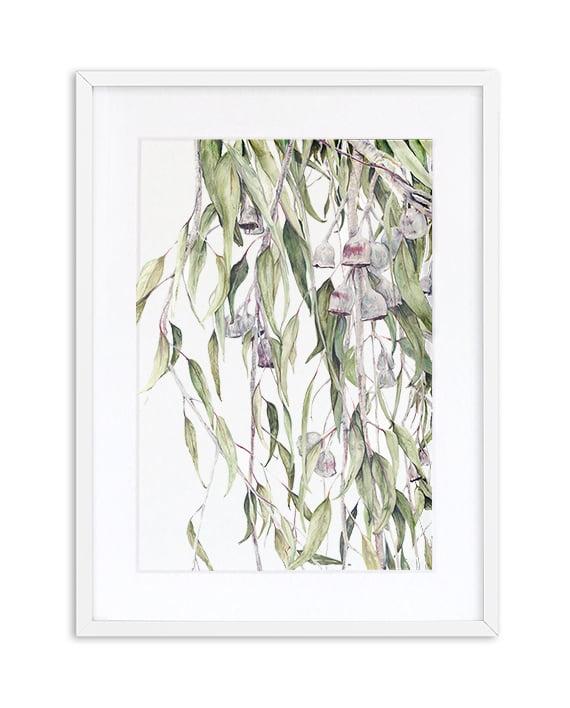 Silver Princess Eucalyptus Caesia print artwork framed White